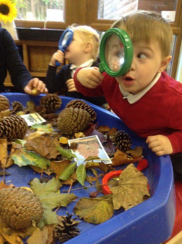 Investigating some autumn leaves and pine cones.